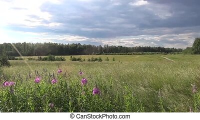 Country Russian summer landscape