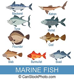Marine Fish Identification Slate With Names. Realistic...
