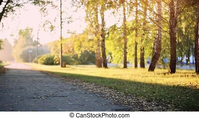 Sun shining through the trees on a path in a golden forest landscape setting during the autumn season with lens flare effect. 1920x1080