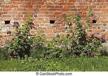 Alze Ziegelmauer, Deutschland, Europa