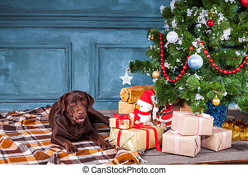 The black labrador retriever sitting with gifts on Christmas...