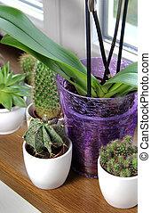 Mix of beautiful houseplants on the windowsill