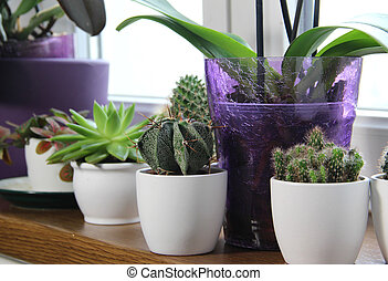 Mix of beautiful houseplants