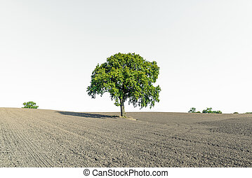 Dry field with a lonely green tree