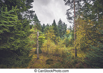 Barenaked tree in a forest with colorful trees