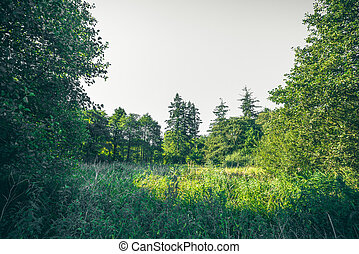Green trees in the spring in a forest
