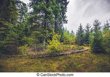Fallen trees in a pine forest