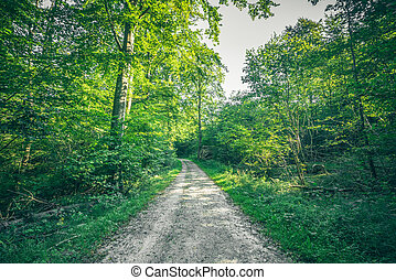 Forest landscape in the spring with a nature trail