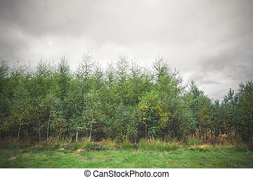 Green trees in the beginning of autumn
