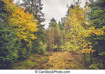 Colorful yellow leaves on trees