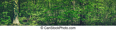 Spring in the forest scenery