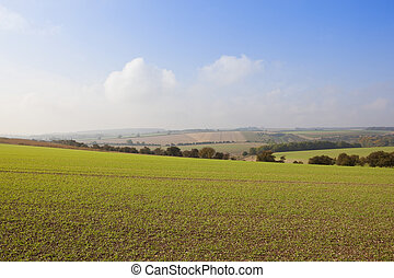 yorkshire wolds agriculture - scenic patchwork fields with a...
