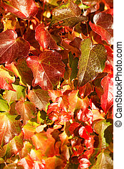 Colorful leaves - Close up photo of beautiful colorful...