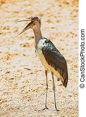 Marabou Stork Bird In Africa