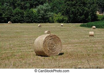 Rural landscape in Dordogne