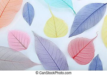 Skeleton leafs on a white background