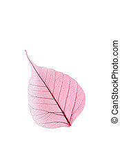 Skeleton leaf isolated on a white
