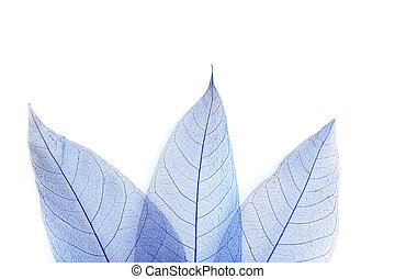 Skeleton leafs on a white background