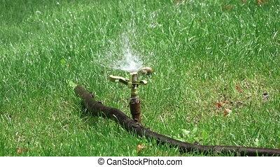 Sprinkler irrigation in park