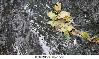 yellow fallen leaves on a gray stone