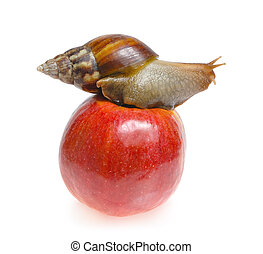 Snail on red apple isolated on white background