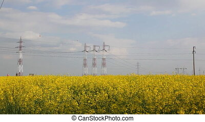 Electricity pillars on yellow field - Electricity pillars on...