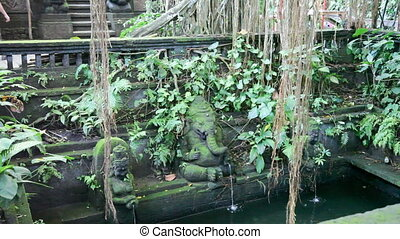 Monkeys forest in Ubud , Bali - Indonesia, Bali