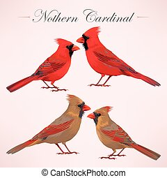 Set of nothern cardinals - Vector set of high detailed...