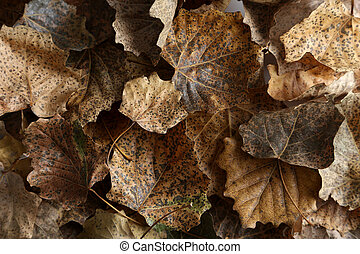 Dry leafs background, close up