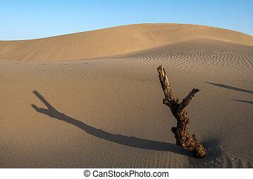 desert - amazing desert view in sunset time