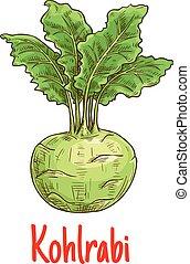 Kohlrabi vegetable with green leaves sketch