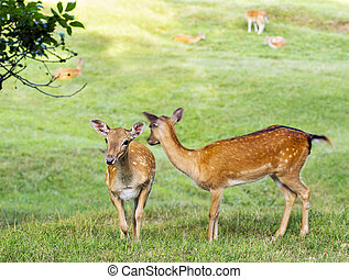 Young deer hind looking around