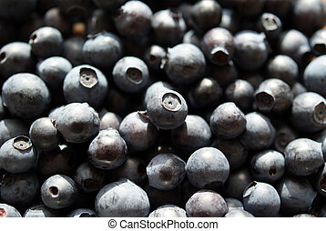 Bilberry Background (Vaccinium myrtillus) - Fresh wild...