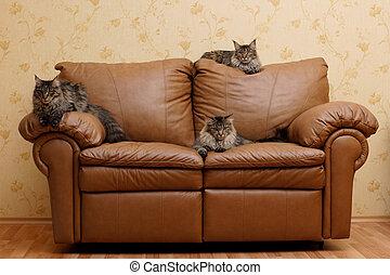 Three cats on a sofa
