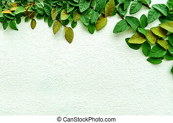 Green leaf border, Isolate of plant on the wall in garden