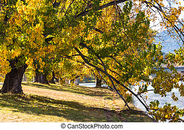 Autumn in Barton Park, Canberra - Autumnal landscape with...
