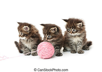 Three small kittens on a white background