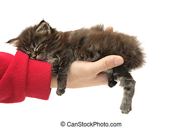small kitten sleeping on a hand against white background