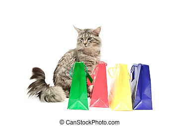 Grey cat with purchases against white background