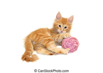 cute red kitten with pink wool ball against white background