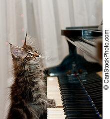 pequeno, Pianista