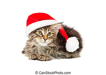 kitten in red hat - kitten in red hat against white...