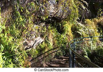 Walking track in mountain - Walking trail in mountain....