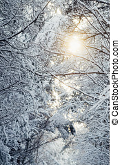 Morning sunflare through snowy forest - Morning sunflare...