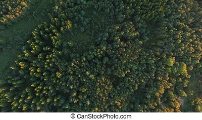 aerial view to green summer forest and power line -...