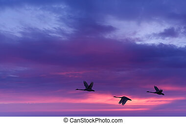 Beautiful sky on sunset or sunrise with flying birds natural...