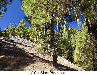 Gran Canaria, hiking path Cruz de Tejeda - Teror, long...