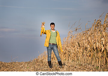 Farmer with corncobs in field - Satisfied young farmer...