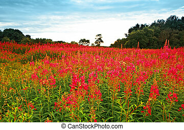Beautiful meadow of wildflowers in Scoltand