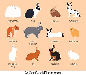 Rabbit, lapin breed icon set. Flat design. Vector...